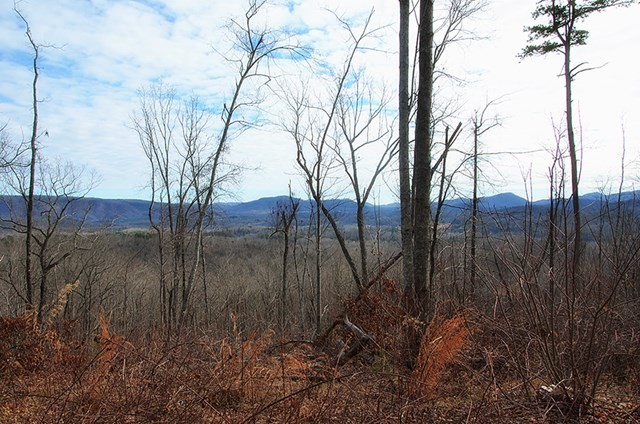 45+ Acres of Unrestricted Land