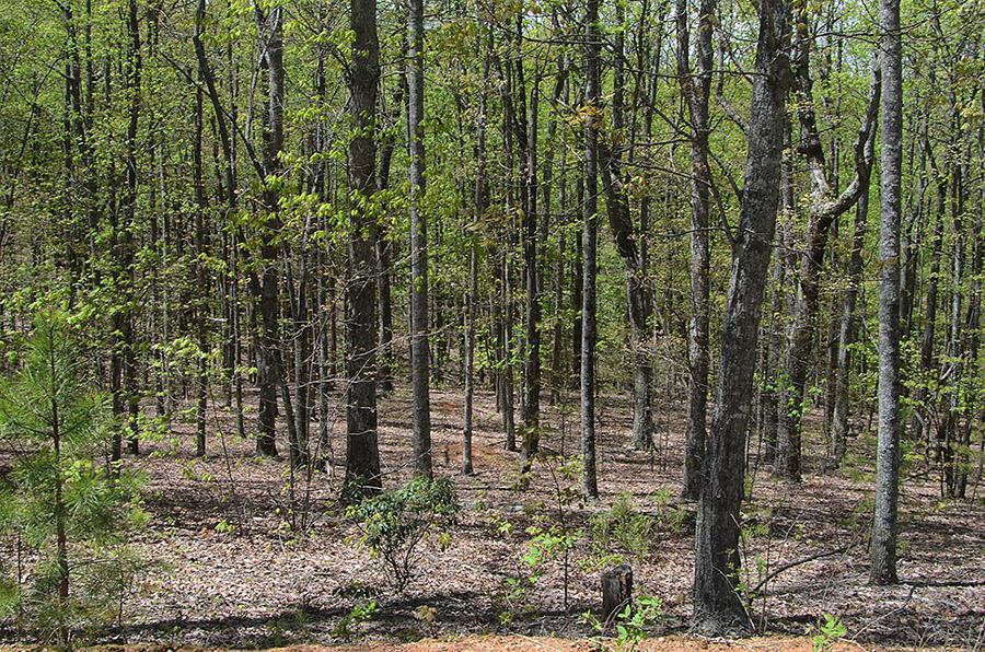 Level Lot In Beautiful Subdivision